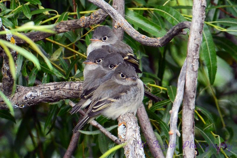 4 Baby Birds