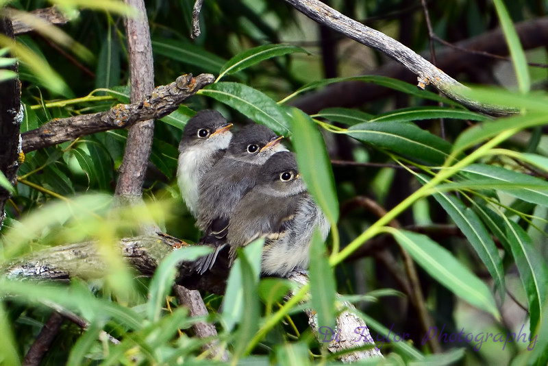 3 baby birds
