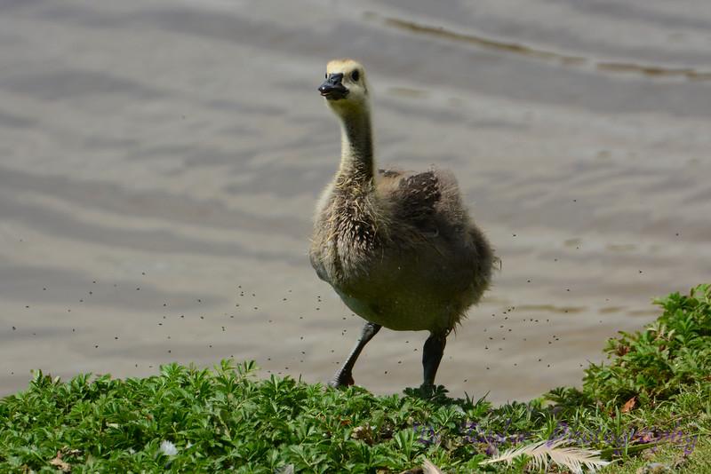 Mom, am I an ostrich????