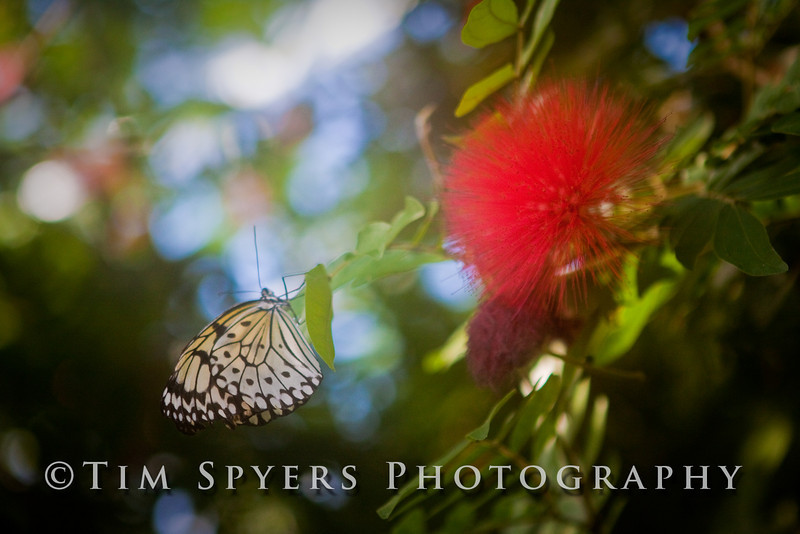 Missouri Butterfly House December 2008