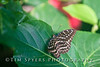Missouri Butterfly House December 2008
