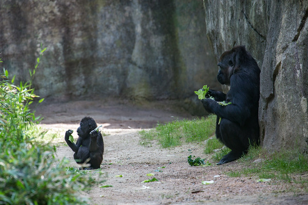 Lunchtime at the Zoo