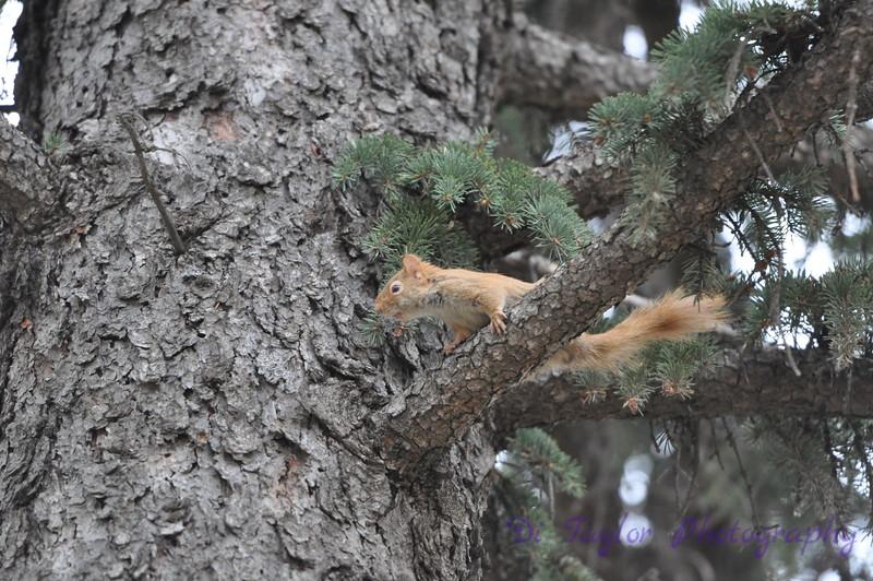 squirrel in Saskatoon