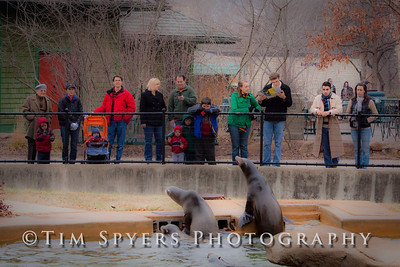 St. Louis Zoo in January.