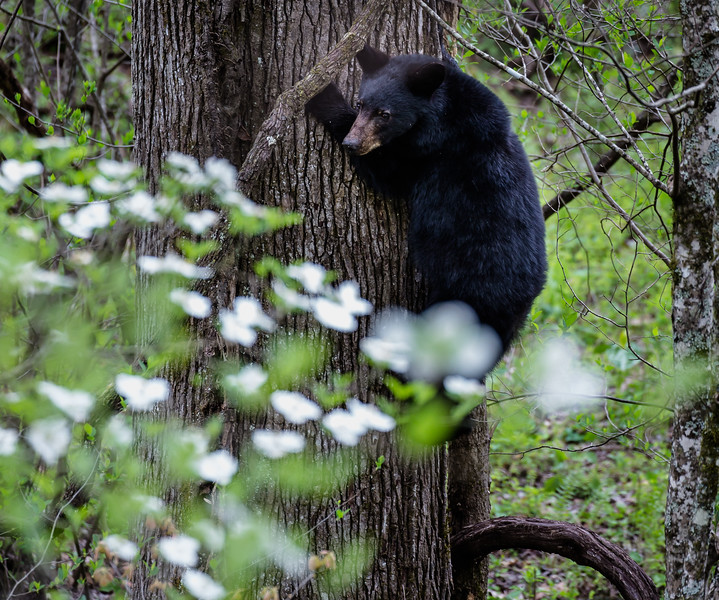 Sudden noise and the cubs run to the tree
