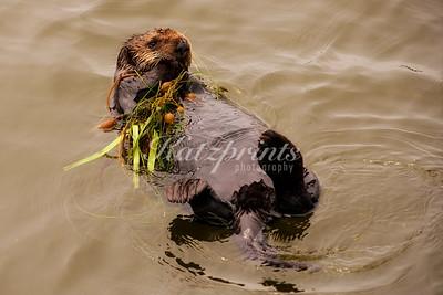 Kelp blankie