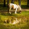 The Reflection of Lamas