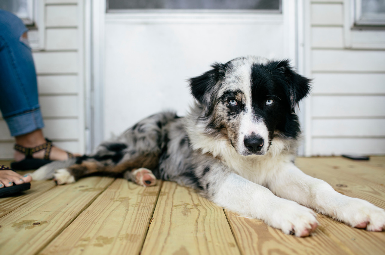 Porch Dog