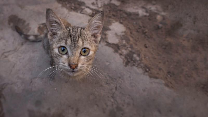 Street kitten looking up