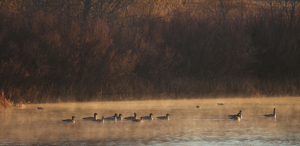 Morning fog and geese