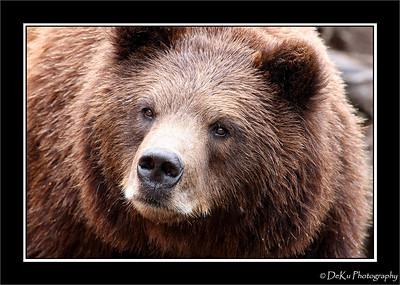 Alaska-Sitka(edit)_0304