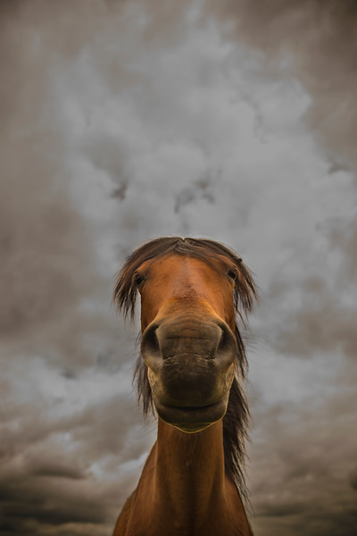 Funny Horse portrait