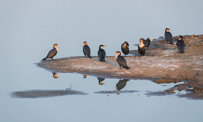Early morning bird reflections