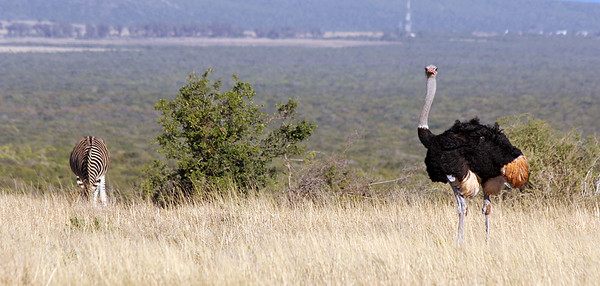 Addo National Park, South Africa