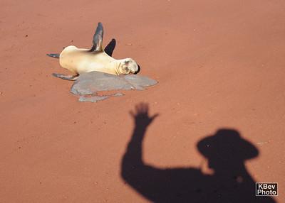 Hey friend (Galapagos, 2009)