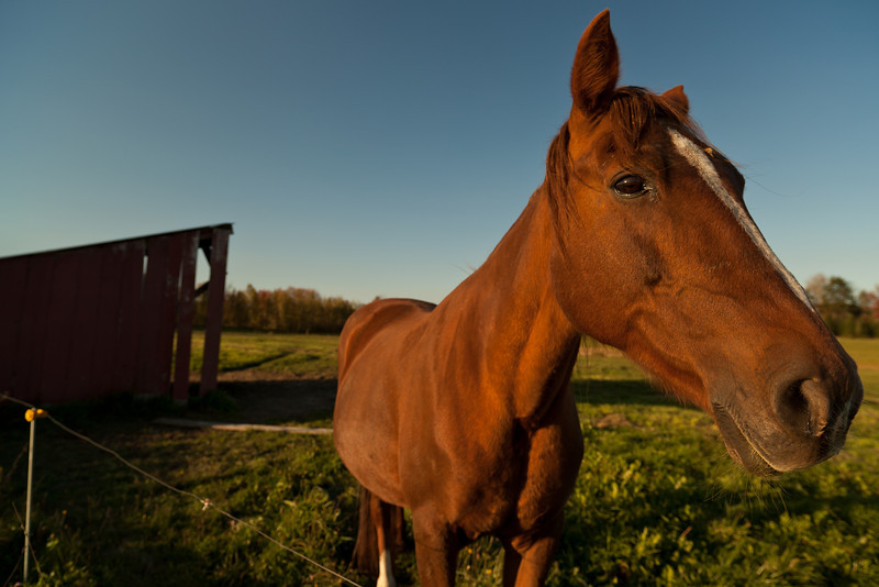 Happy Horse - Morrisville, VT