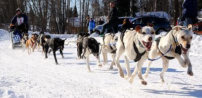 2011 Limited North American Sled Dog Race - Fairbanks - Alaska