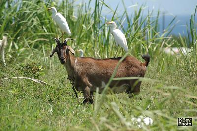 Best Buddies (St. Kitts, 2005)