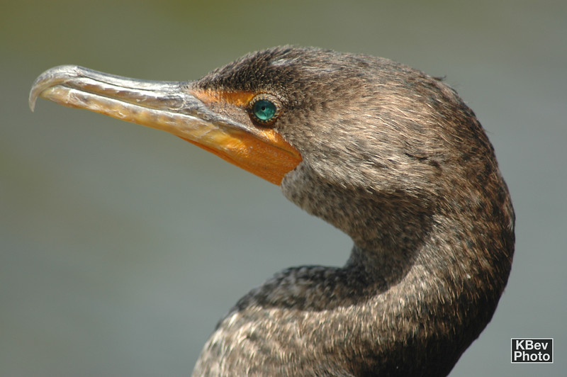 Experimenting with bird photos (Everglades, 2007)
