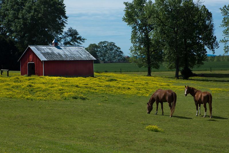 JHP 20160420-008 horses barn yellow field