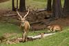 JHP 20160505-492 deer family