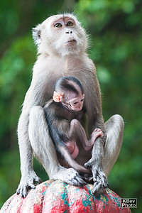 Baby monkey and mom