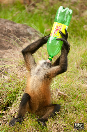 Once she finished the OJ, Chita found a somewhat empty 2L Squirt bottle.