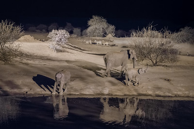 Water hole at night