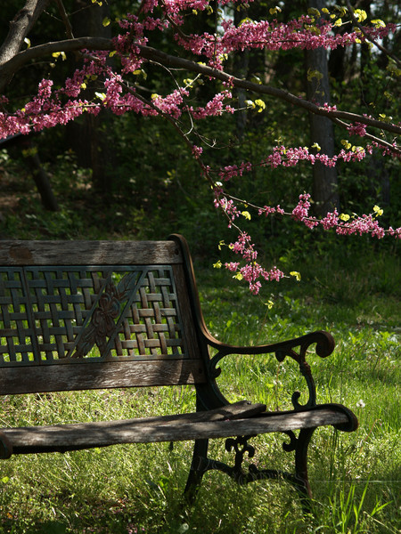 Old Bench & Redbud Branch