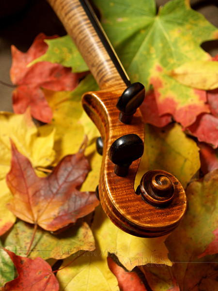 Maple Violin Scroll on Maple Leaves