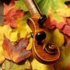 Maple Violin Scroll on Maple Leaves