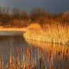 Dramatic light on marsh before a storm in spring; Quakertown, PA