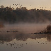 Geese in Marsh, Heller Rd. Quakertown