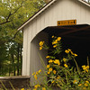 Loux Covered Bridge with Tickseed - Bucks County, PA