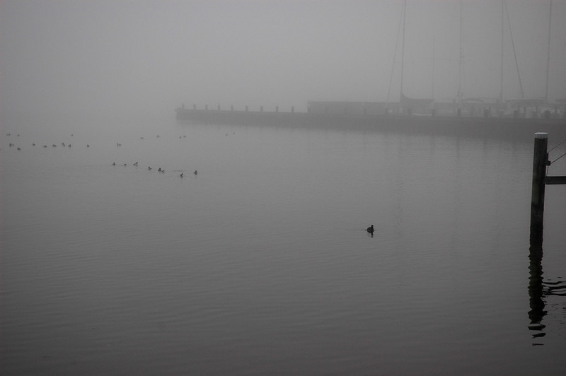 Eastport foggy morning