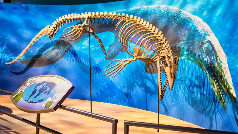 Taniwhasaurus antarcticus
