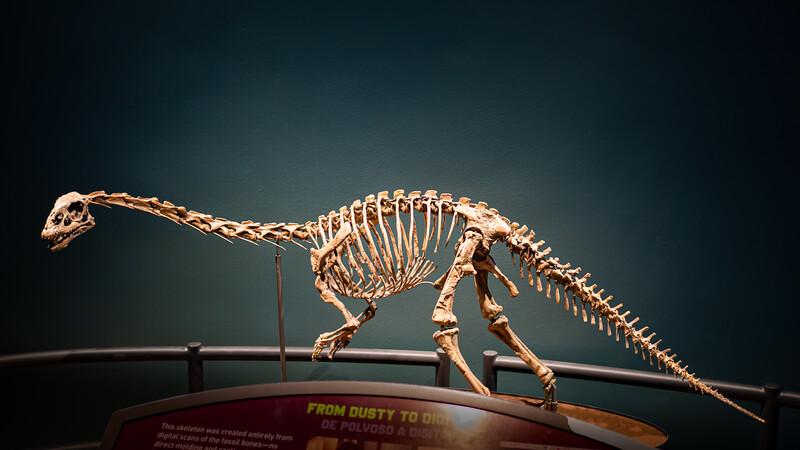 Sauropodomorph A