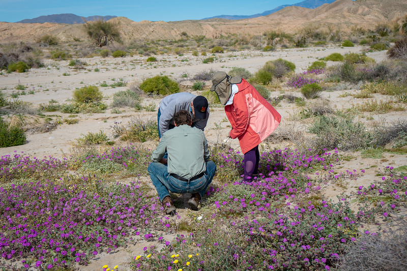 Some of the tour group learning all about the desert wildflowers