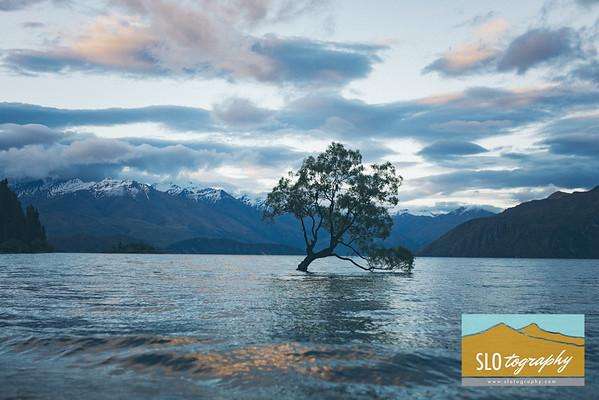 Aotearoa ~ New Zealand