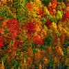 Appalachian Fall Hillside-Oct132014_0368