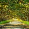 Oak Lane-Wormsloe Plantation-Savannah-Oct112014_0689