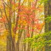 Foggy Fall Forest In Appalachia-Oct132014_0285