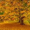 Fallen Leaf Carpet-Oct122014_0450