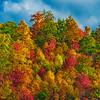 WVA Fall Forest Strong Sun-Oct132014_0373