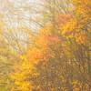 Appalchian Fall Color-Foggy Morning-Oct132014_0288