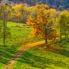 Leaf Strewn Road Apallachia-Oct132014_0345