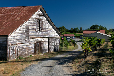 White Barn and Vines, Sonoma, CA