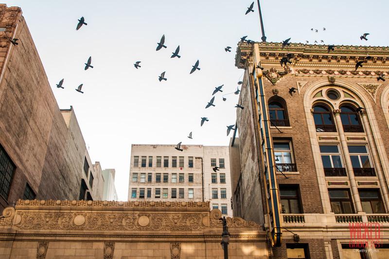 Pigeons over Broadway.
