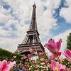 <strong>La Tour Eiffel entouré de fleurs</strong>