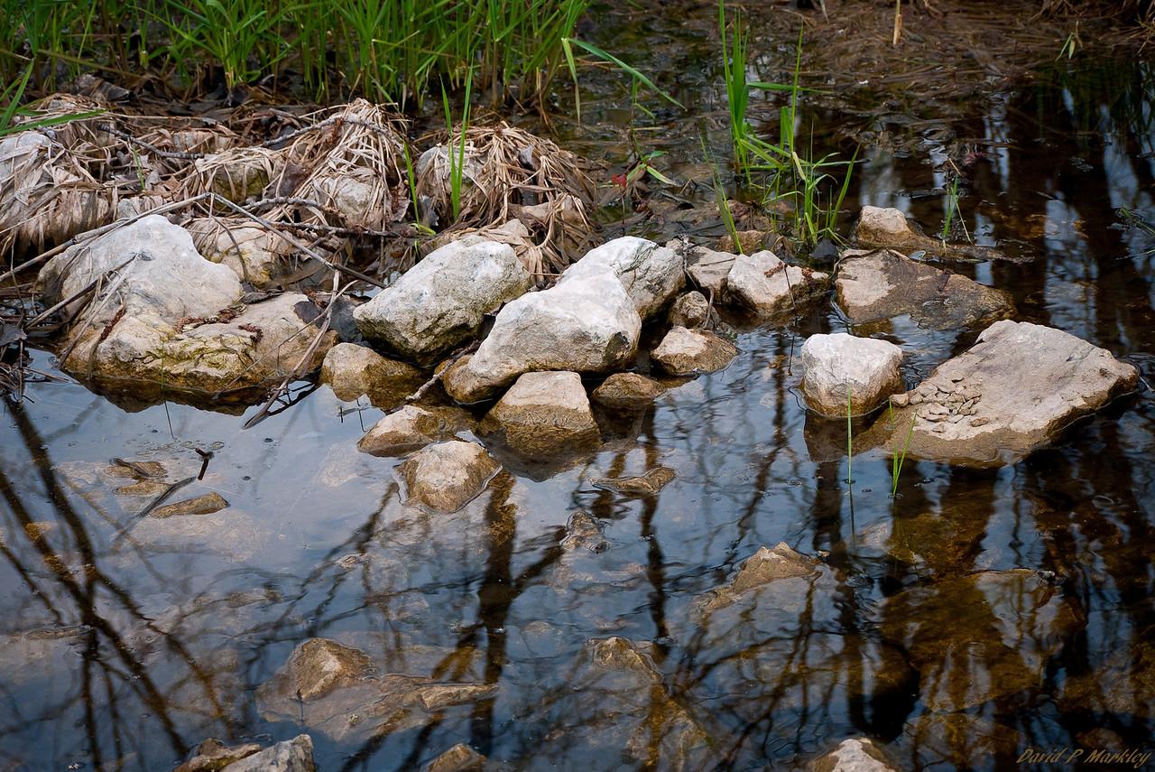 Rocky Swamp